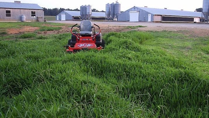Native Grass Mowing